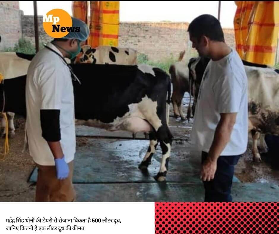महेंद्र सिंह धोनी की डेयरी से रोजाना बिकता है 500 लीटर दूध, जानिए कितनी है एक लीटर दूध की कीमत